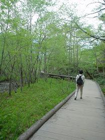 kamikochi0805 (4).JPG